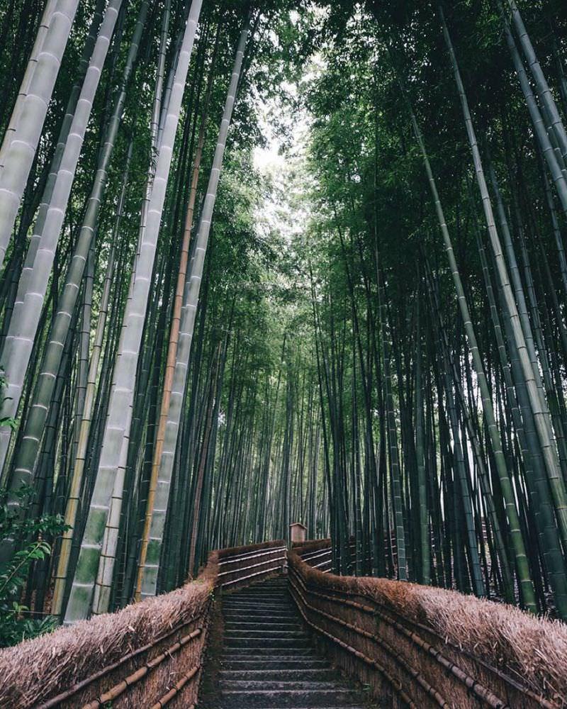 Belleza de japon foto 2