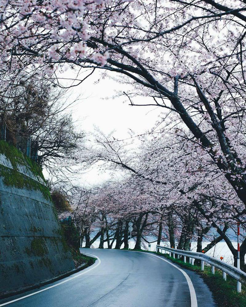 Belleza de japon foto 7