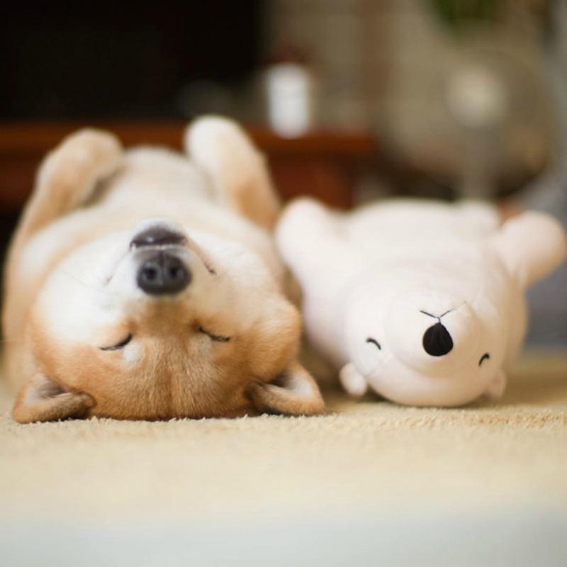 Perro y oso de peluche foto 1