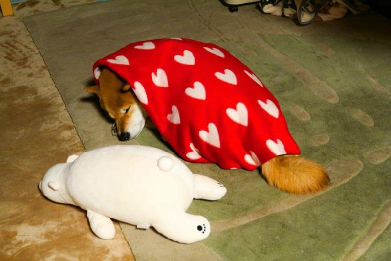 Perro y oso de peluche foto 5