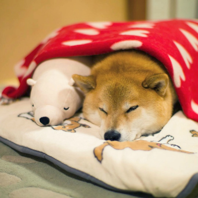 Perro y oso de peluche foto 6