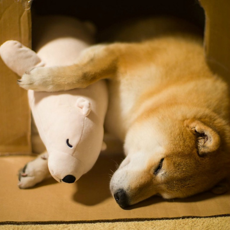 Perro y oso de peluche foto 9