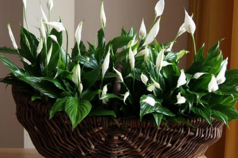 10 plantas de interior que purifican el aire de tu hogar - Plantas de interior que purifican el aire ...