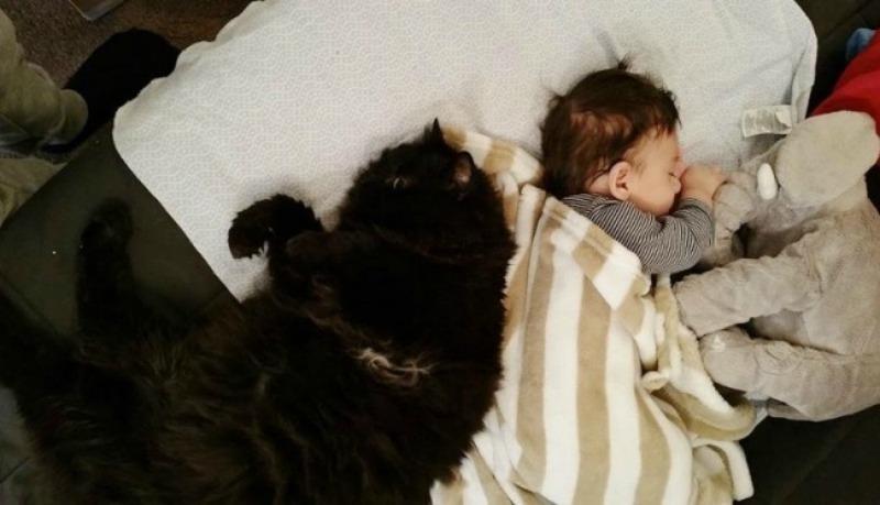 Gato y bebe foto 7