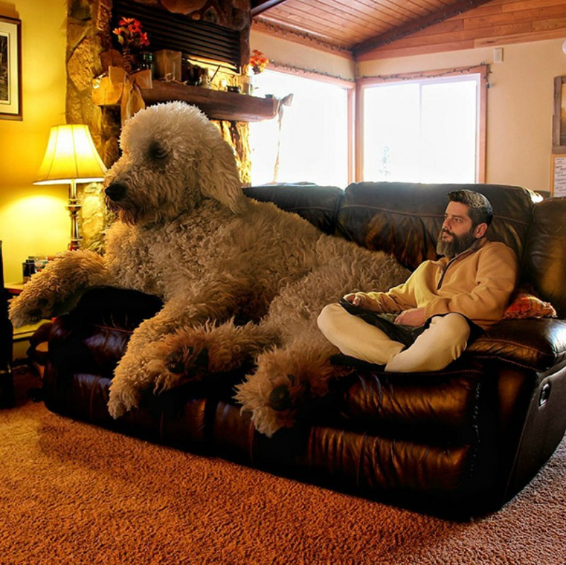 Perro gigante foto 1