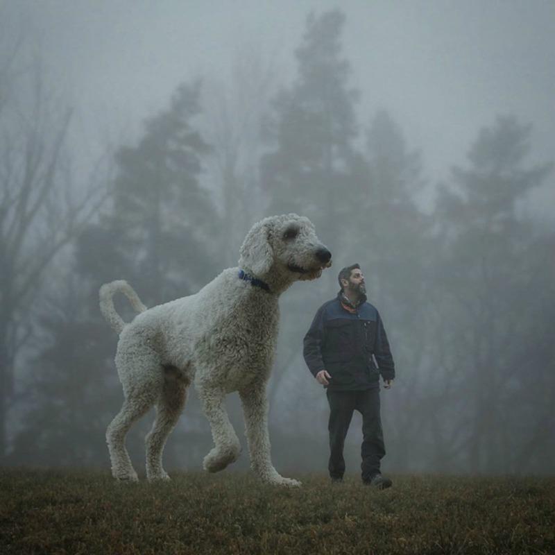 Perro gigante foto 11