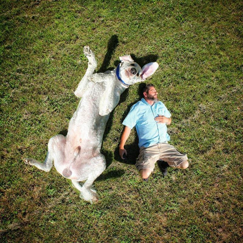 Perro gigante foto 12