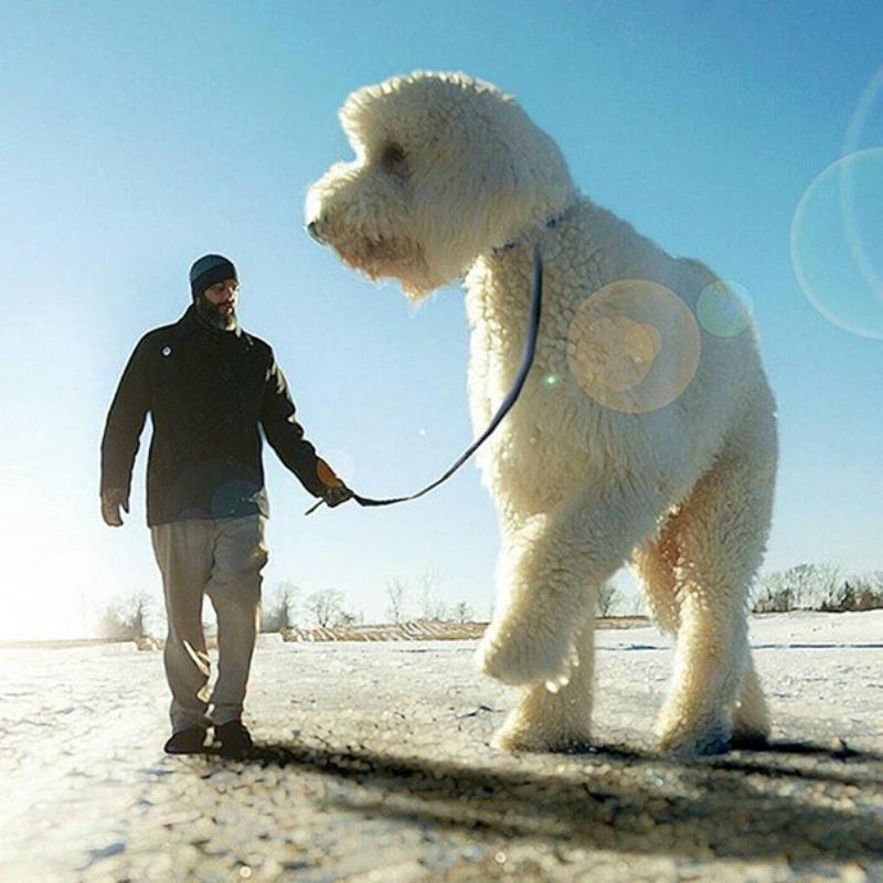 Perro gigante foto 13