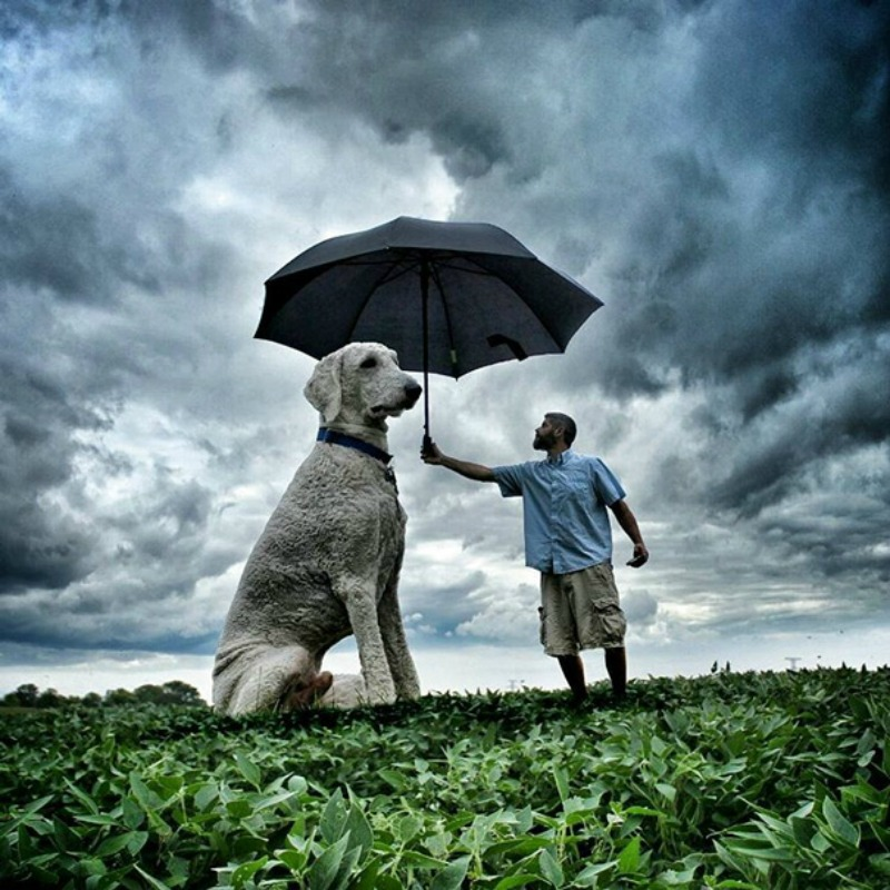 Perro gigante foto 14