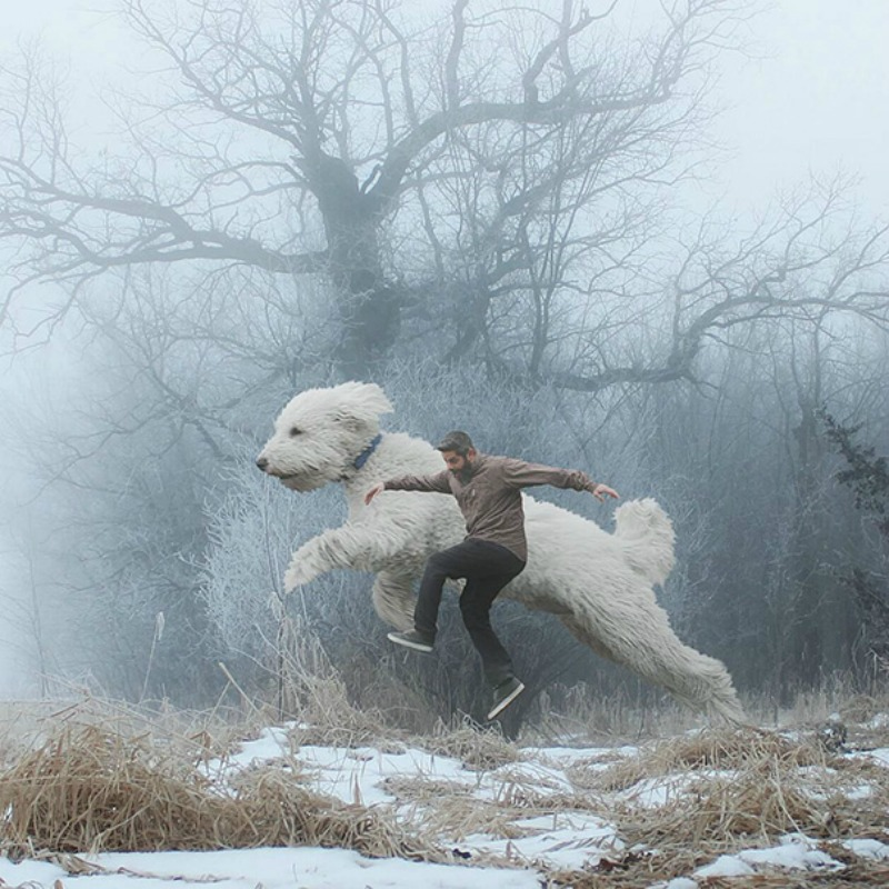 Perro gigante foto 16