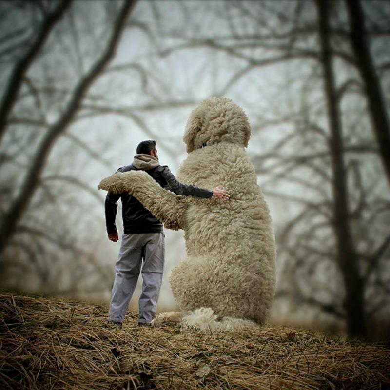 Perro gigante foto 18