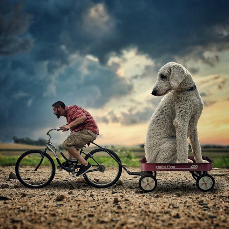 Perro gigante foto 2