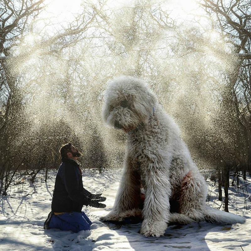 Perro gigante foto 4