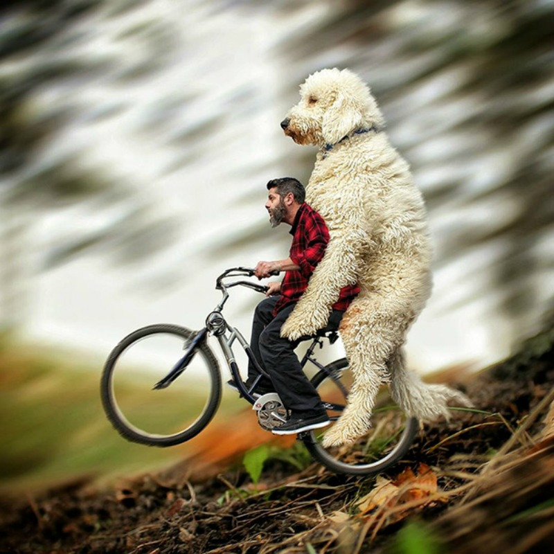 Perro gigante foto 7