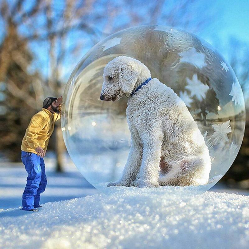 Perro gigante foto 8