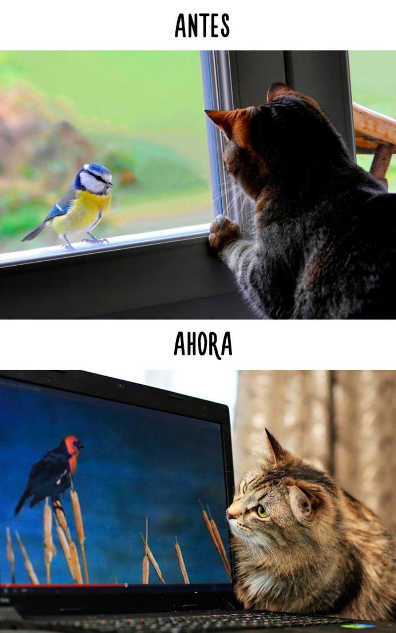 La tecnologia y los gatos 2