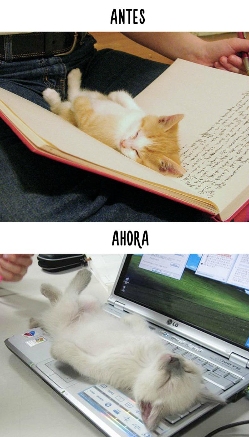 La tecnologia y los gatos 3