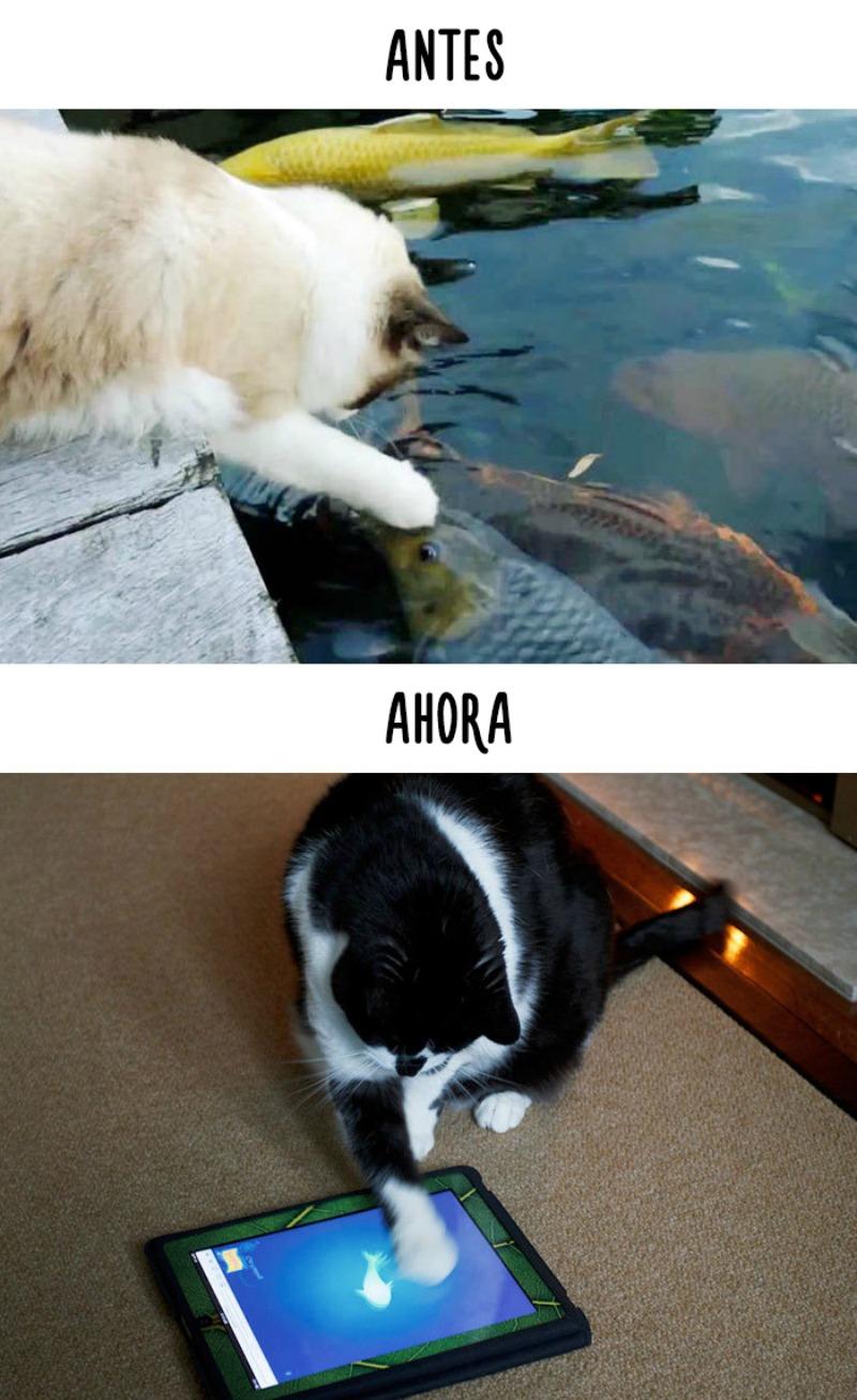 La tecnologia y los gatos 5