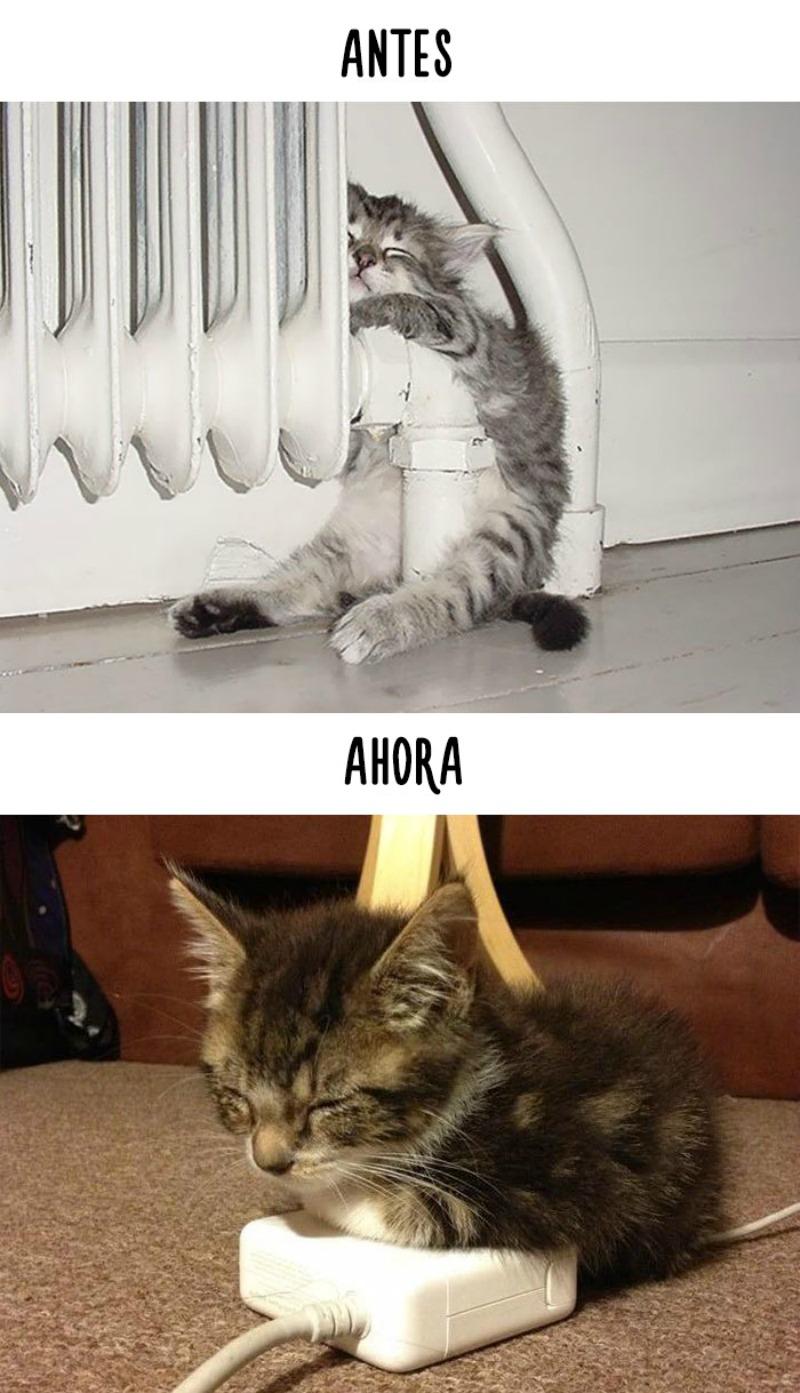 La tecnologia y los gatos 9