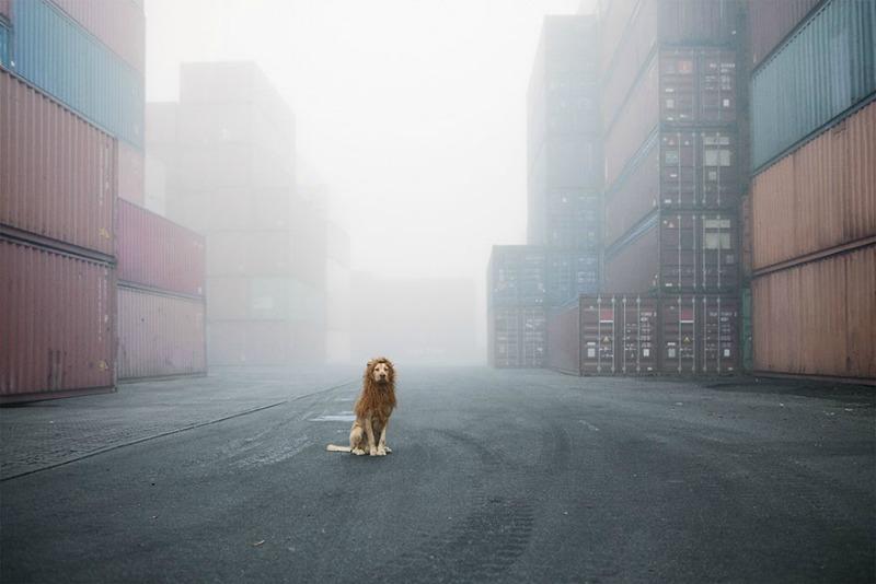 Perro se convierte en leon 1