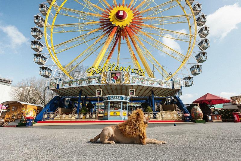 Perro se convierte en leon 10