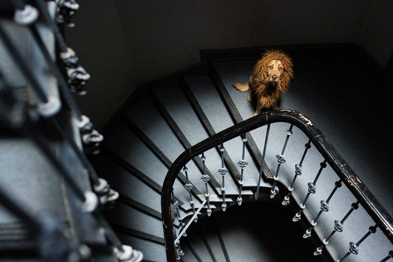 Perro se convierte en leon 4