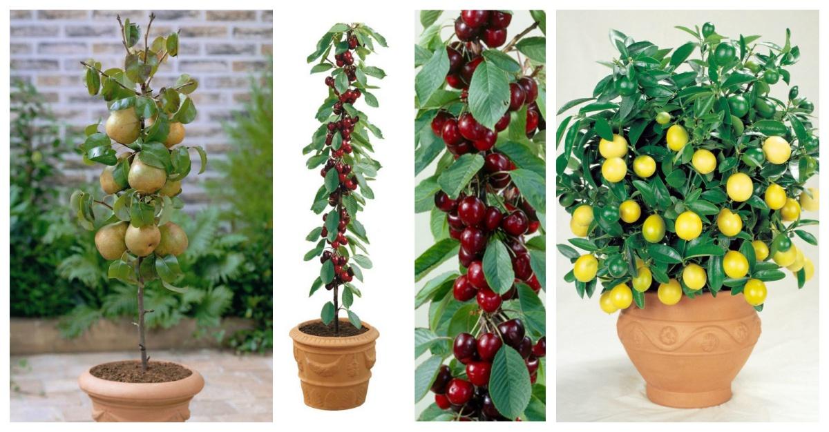 Estos rboles frutales son ideales para tener en casa a n for Cuando se podan los arboles frutales