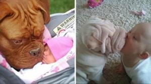 perros y bebes foto portada