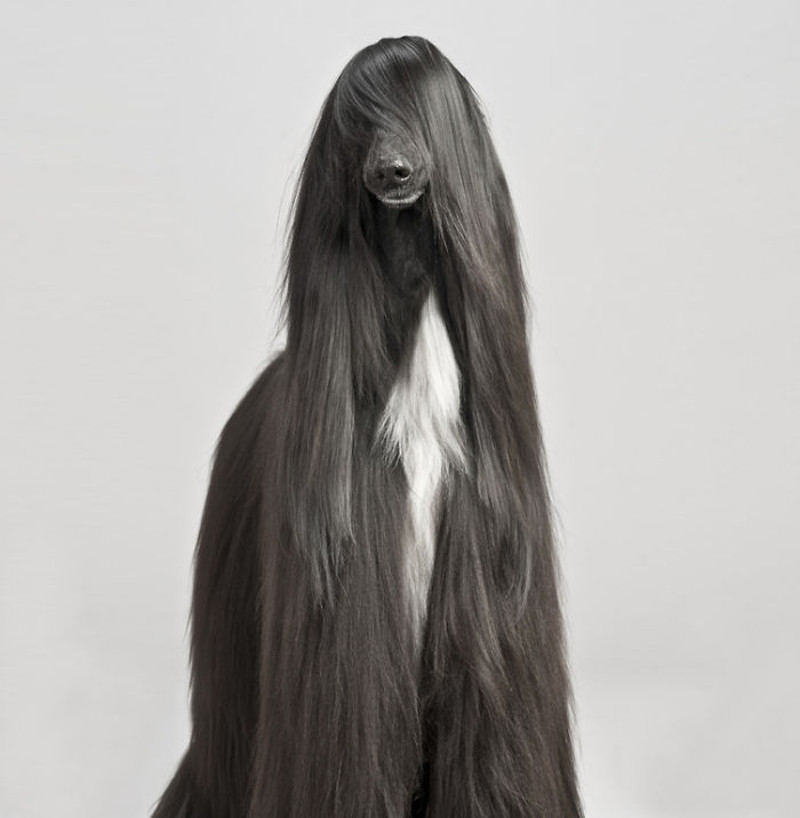 cabelleras-doggos-1