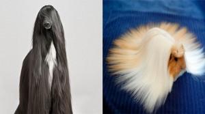 cabelleras-doggos-portada