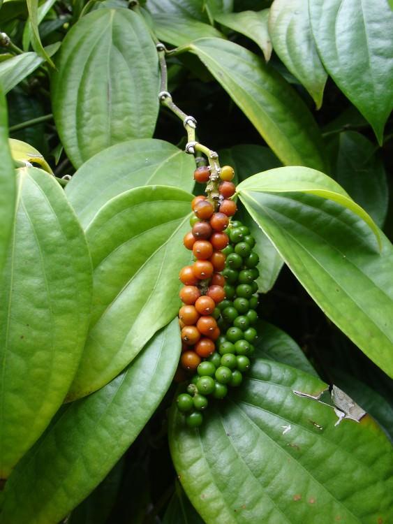 10- frutas