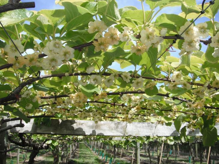 11- frutas