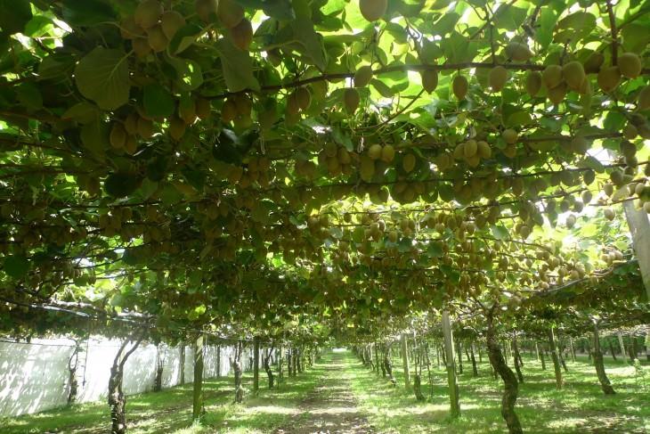 12- frutas