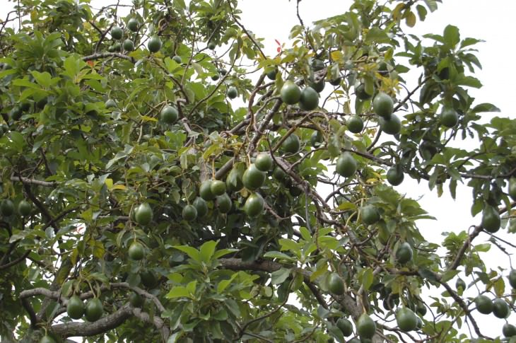 16- frutas