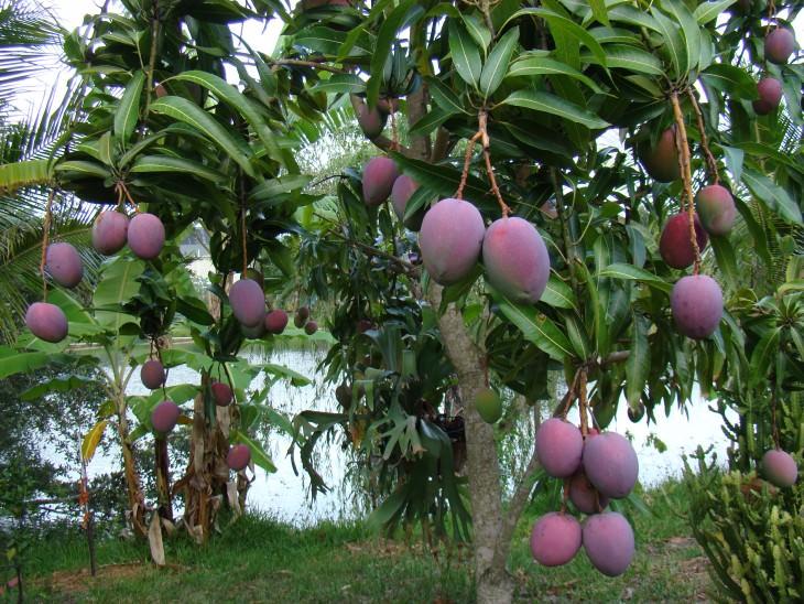 20- frutas