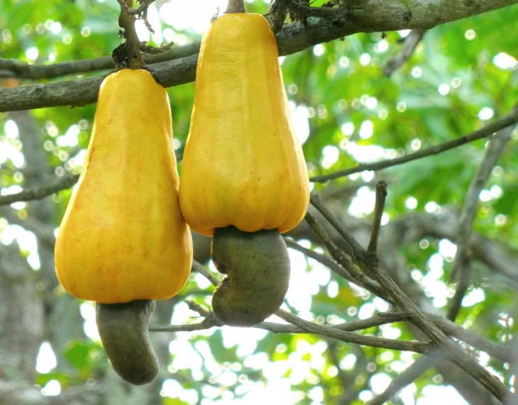 23- frutas