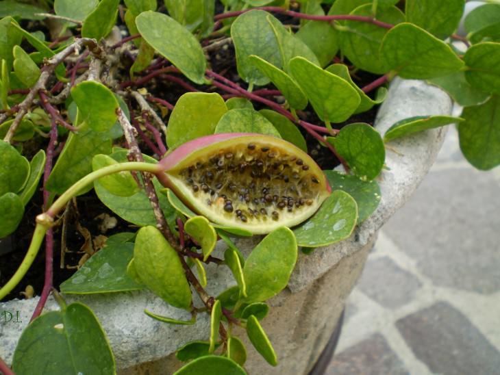 28- frutas