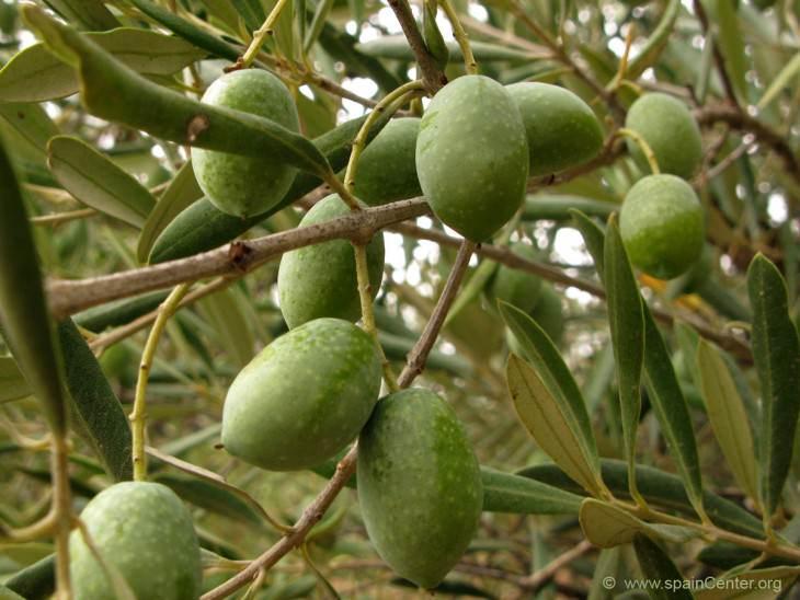 34- frutas