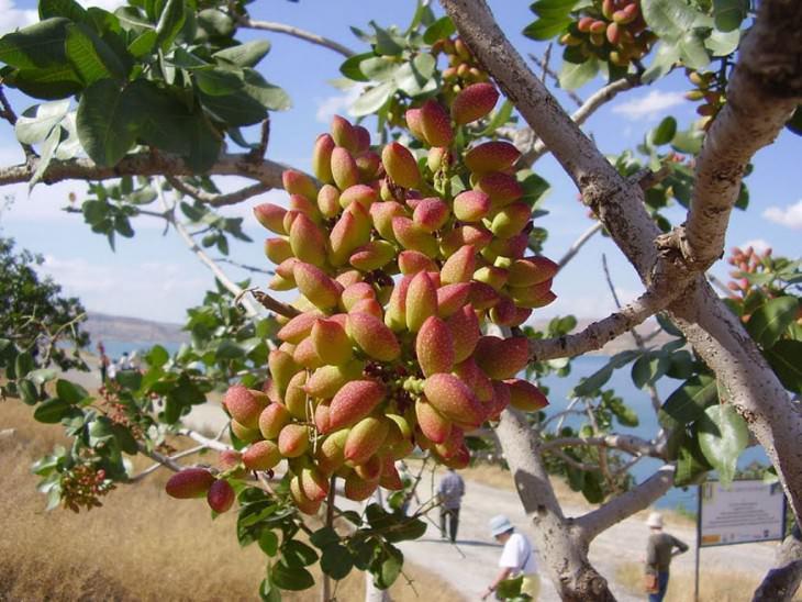 35- frutas