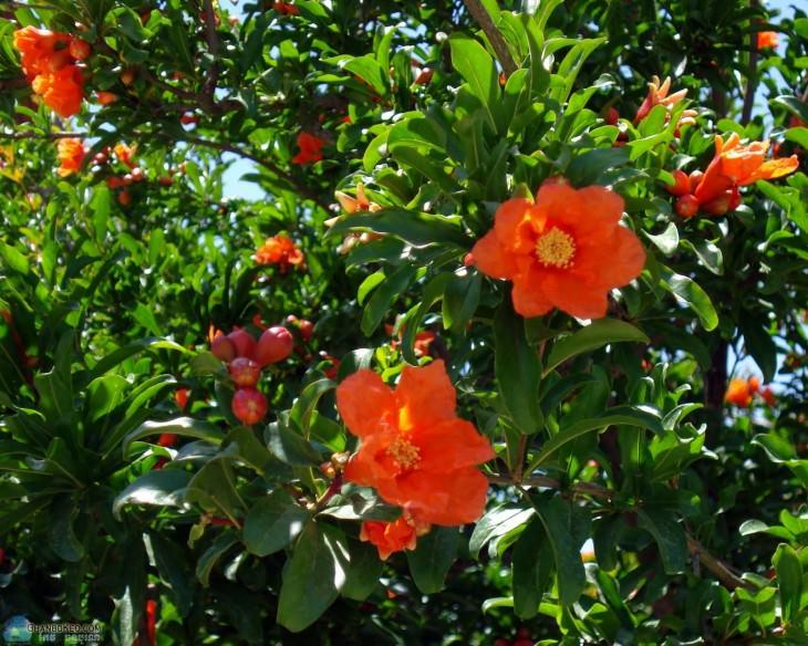 36- frutas