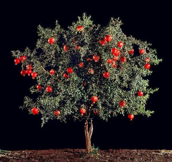 37- frutas