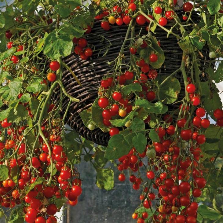 38- frutas