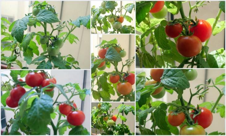 39- frutas