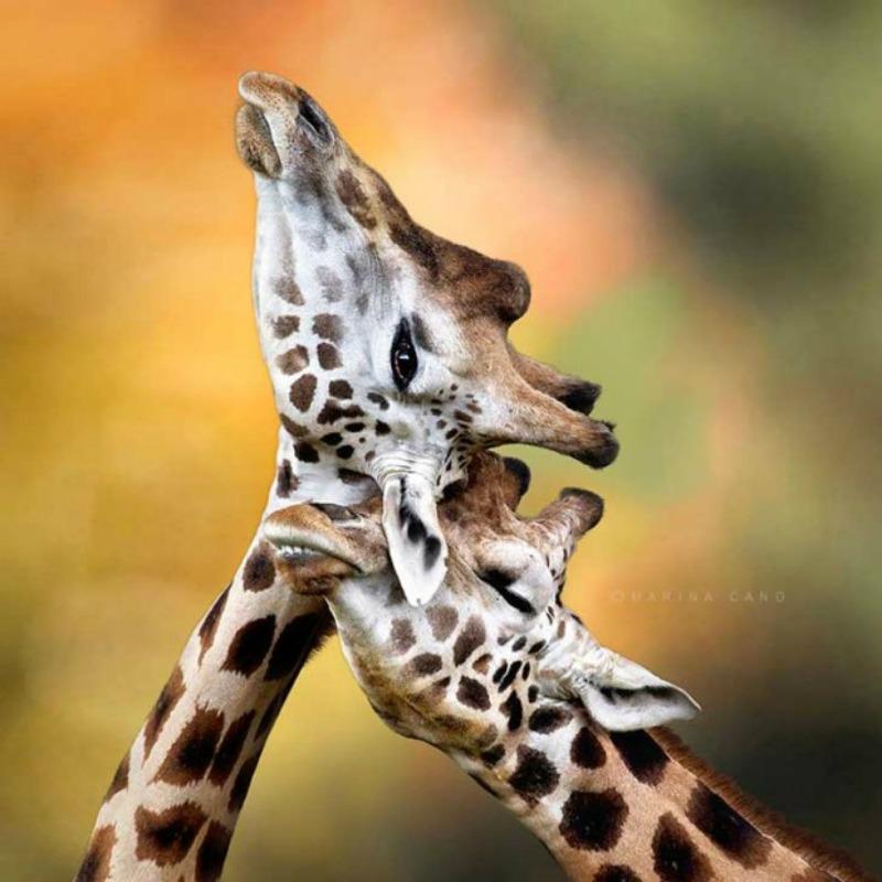 Amor y animales Foto 1