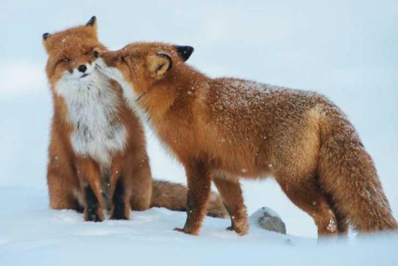 Amor y animales Foto 10