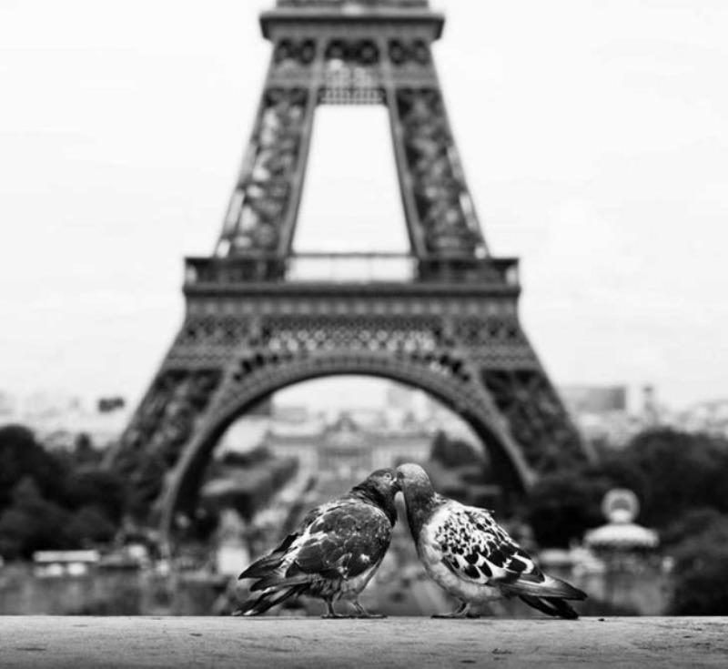 Amor y animales Foto 12