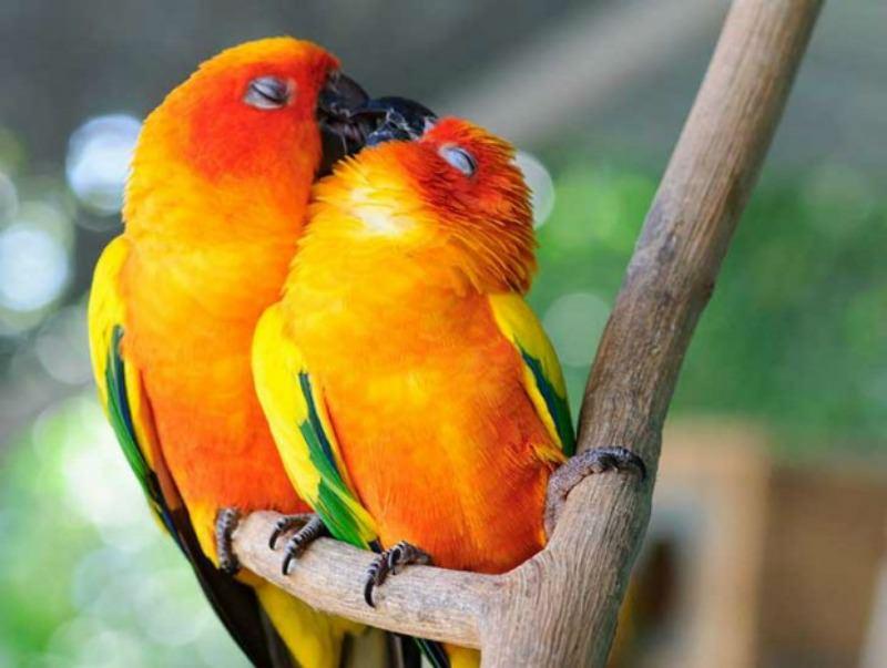 Amor y animales Foto 15