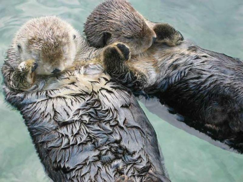 Amor y animales Foto 16
