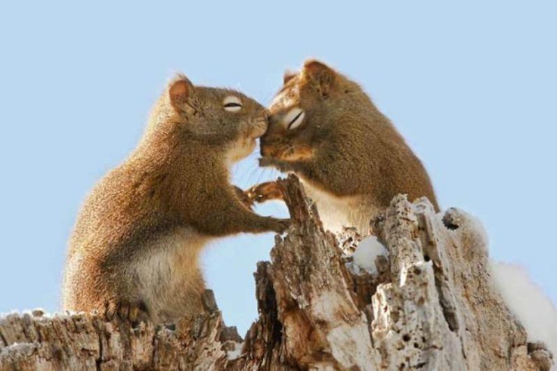 Amor y animales Foto 17