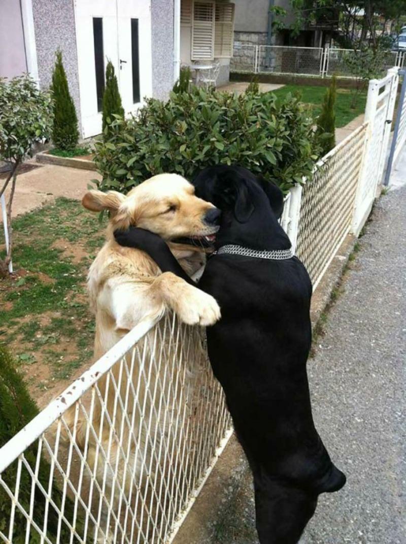 Amor y animales Foto 19